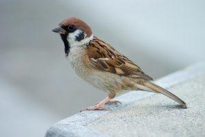 aren ruta ornitologica
