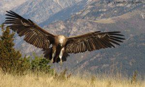 congosto sopeira turismo ornitologico