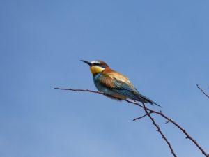 estopiñan observatorio de aves Aragón
