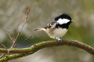 estopiñan observatorio de aves migratorias