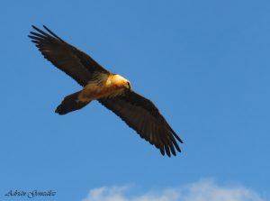 mongay sierra avistamiento aves