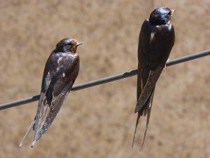 tolva observatorio aves